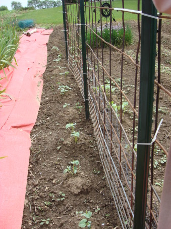 My 40 x 50 Garden, Trellis I put Cucumbers and Peas on, Gardens Design