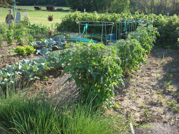My 40 x 50 Garden, Gardens Design