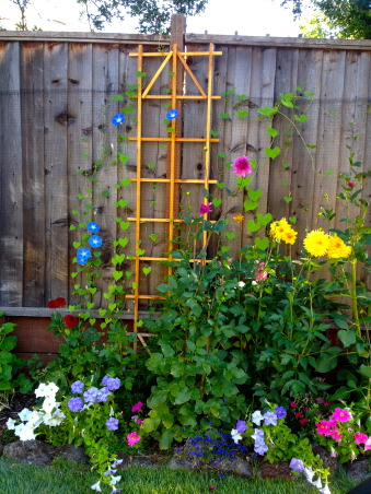 Backyard garden~, Raised beds for vegetables or cutting flowers, a Gnome Tree, flower borders and trees...., Beach Style Home~~ bedding flowers along the fence     , Gardens Design