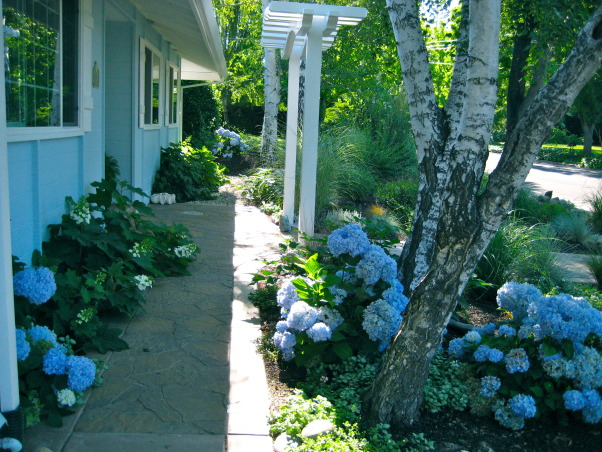 Beach Style Home's front Garden/Landscaping, To give this large side property a look of being at the Beach, we used Beach-Style grasses, made hills like 'sand dunes', driftwood, rocks, blue  flowering plants, curvy rocks pathways, and Black Mulch., Beach Style Home~~ blue hydrangeas give the garden a look of water  , Gardens Design