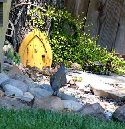 "Backyard garden~, Raised beds for vegetables or cutting flowers, a Gnome Tree, flower borders and trees...., Beach Style Home~~ we made a ""Gnomes"" tree and this Daddy Quail decided to bring the kids by~~~    , Gardens Design"
