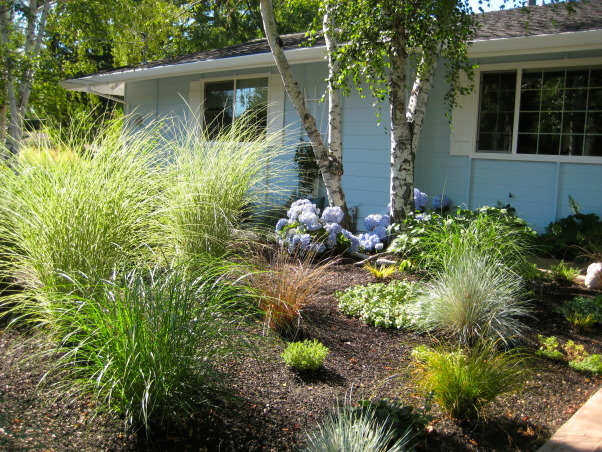 Beach Style Home's front Garden/Landscaping, To give this large side property a look of being at the Beach, we used Beach-Style grasses, made hills like 'sand dunes', driftwood, rocks, blue  flowering plants, curvy rocks pathways, and Black Mulch., Beach Style Home~~  landscaping in front yard , Gardens Design