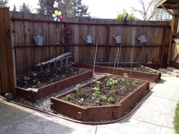 Backyard garden~, Raised beds for vegetables or cutting flowers, a Gnome Tree, flower borders and trees...., Beach Style Home~~  raised beds for vegetables or cutting flowers....  also hung on the fence are some of my Antique watering cans     , Gardens Design
