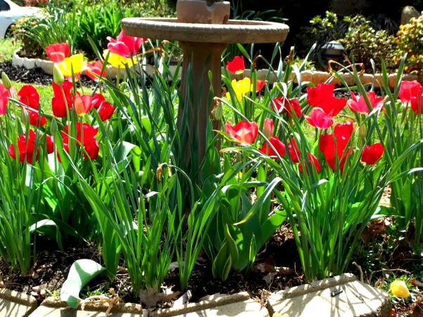 SPRINGTIME!!, Gardens Design