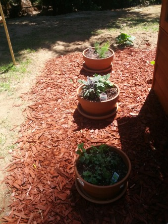 Backyard Botanical Raised Garden, This is my outdoor botanical garden.  I have planted numerous things with the hopes of being able to eat cleaner and have organic produce at all times., Potted plants:  gingermint, sage and asparagus  , Gardens Design
