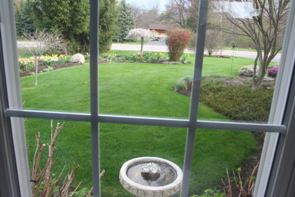 Spring is in the air!, A walk through my yard as it begins to strut its stuff., Gardens Design
