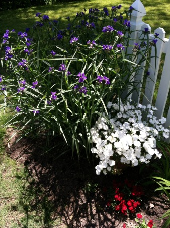 Spring Time in Tennessee, The purple flower is Spider Wart., Gardens Design