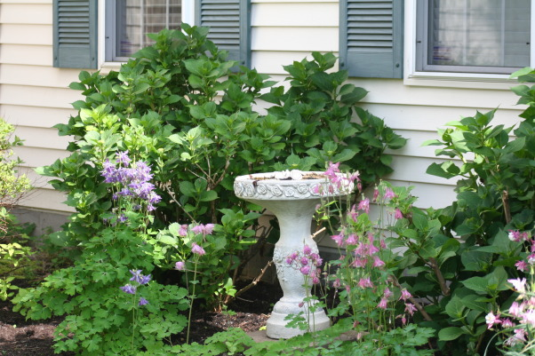 Today's walk ..., My little slice of heaven!, Old fountain turned into a bird bath and surrounded with columbine and hydrangeas. One of my favorite areas., Gardens Design