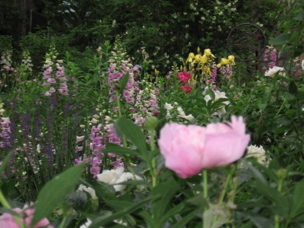 Foxglove love, Gardens Design