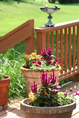 Ahh - summer in the garden!, My gardens, maturing and thriving  in the North East's summer., Pots on the deck are showing their colors. Other then teh wave petunia, I can't recall their names.    , Gardens Design