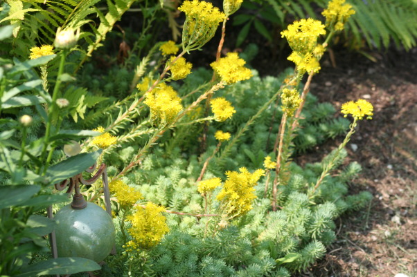 Ahh - summer in the garden!, My gardens, maturing and thriving  in the North East's summer., Succulents in the front garden. They love the heat and the dry section of the garden.    , Gardens Design