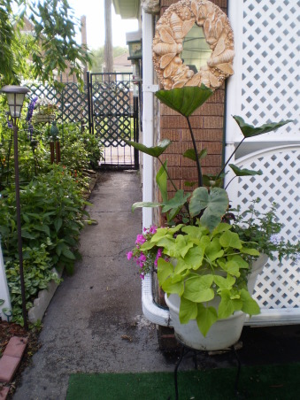 a senior  Pro Garden, Gardening with Tropicals is a challenge but very rewarding , this is the Cup plant, uses as a center for pot along with sweet potato vine, verbena, & other fillers     , Gardens Design