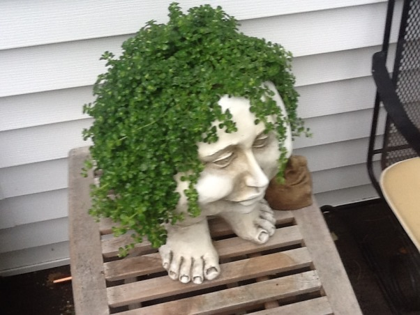 a senior  Pro Garden, Gardening with Tropicals is a challenge but very rewarding , my funny head filled with  a sedum . looks like a green wig ( so my daughter says   what do you think? :.   , Gardens Design