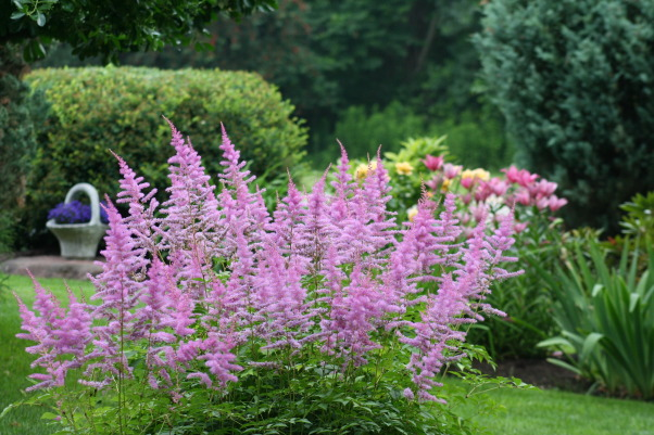 It just keeps changing!, Each few weeks, the gardens change and my excitement gets renewed. Walk with me!, 4 ft Astilbe  ... look like cotton candy., Gardens Design