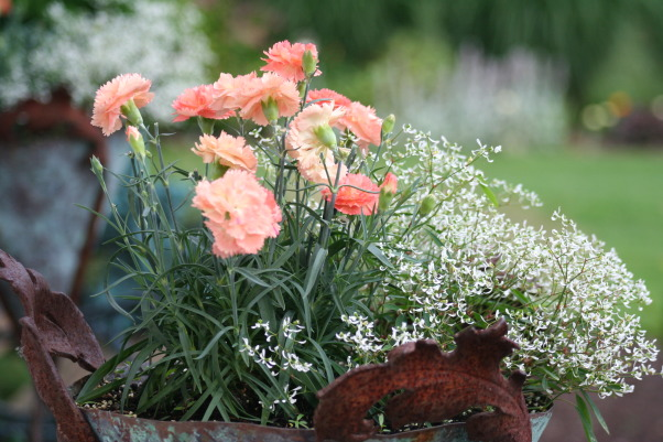 It just keeps changing!, Each few weeks, the gardens change and my excitement gets renewed. Walk with me!, Carnations in my pots keep the bunnies from hacing dinner at my house.  , Gardens Design