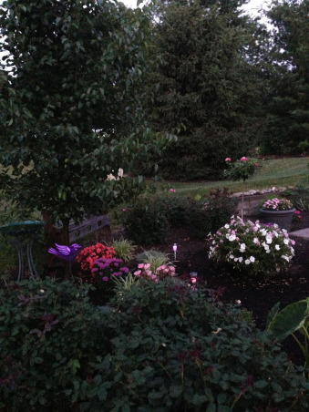 My Gardens, greenhouse, flowers and pool, My outdoor spaces and flowers, flowers,landscape, Gardens Design