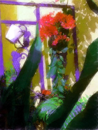 TroPICS., Pictures of my tropical garden in Florida., Gardens Design