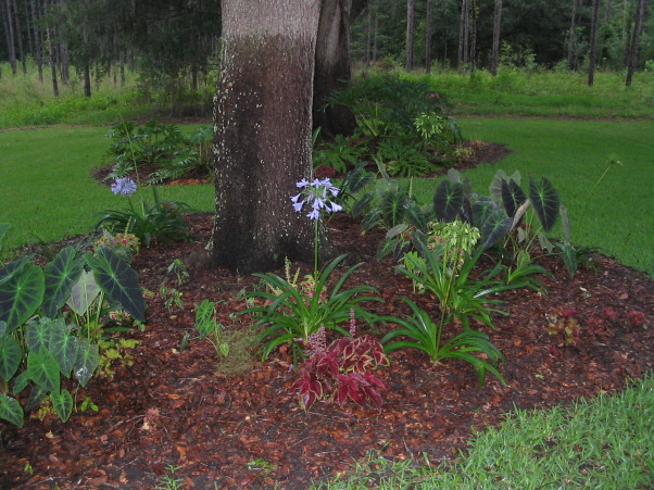 "North Florida Tropical Garden , A tropical garden retreat outside Gainesville Florida provides a vacation getaway without ever leaving my yard.  It will always be ""in process"" and will change and evolve over the years as I find ways to add color and beautiful plants to look at., Yards Design"