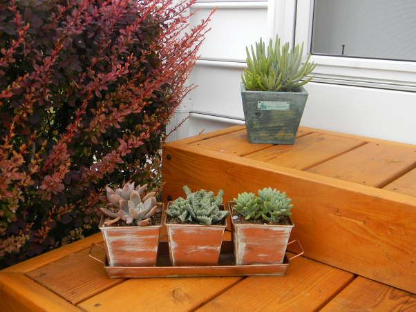 The Ultimate Honey Do: Pergola and Furnishings, Pergola with dining and entertaining space and custom touches built by my husband., Cedar steps built by my husband and succulents in copper pots., Patios & Decks Design