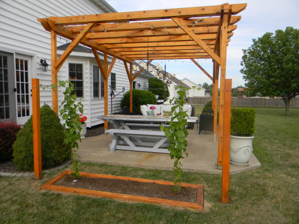 The Ultimate Honey Do: Pergola and Furnishings, Pergola with dining and entertaining space and custom touches built by my husband., View of the cedar bed made by my husband that contains the grapes (Vidal Blanc) that will provide shade and maybe a small amount of wine! , Patios & Decks Design