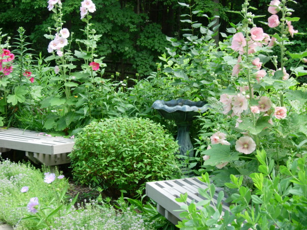 My secret gardens, Half moon shaped garden with holly hocks herbs false indigo birdbath pin cushion plant , My husband made the benches. Lots of Hollyhocks!, Gardens Design