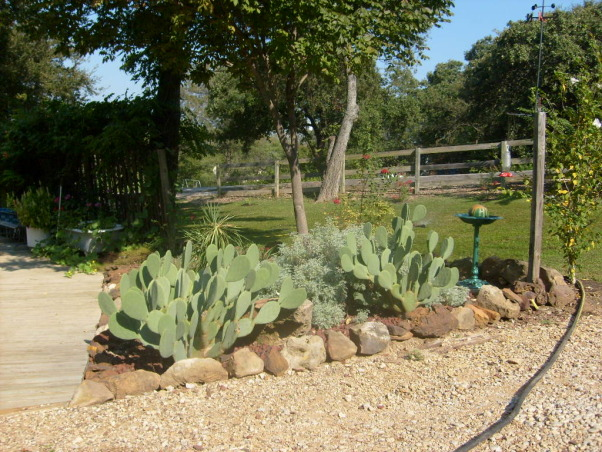 Texas  Pride  rock garden, we started out with the rock wishing welland outhouse and just keeps going!!My husband really did a great job it was 10 tons of rock, These PRICKLESS CACTI love this spot , Yards Design