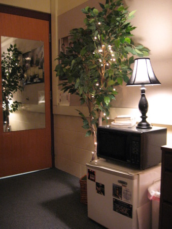 Junior Year - Home Away from Home, My roommate and I tried to create a cozy spot to relax.  We love kicking back on the couch with a cup of tea at night while we go over our homework or watch The Office - we don't get HGTV at school :(, The ficus was an 18th birthday present to my roommate from one of her friends at home.  Funny idea at the time but came in quite handy!  Haha!, Dorm Rooms Design