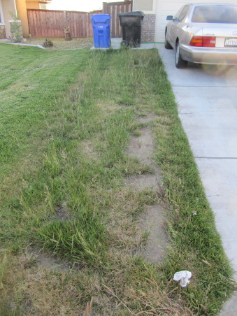 Modern Low Maintenance Landscape, My idea is to transform old front yard to new water saving landscape with modern,low maintenance and beauty look for all year long., L side        , Landscaping