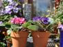 阳台的花, 以前阳台的花, Gardens Design