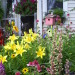 My Small Front Porch , I have a very small from porch with a small flower garden in front., Mid-summer blooms in the flower garden off my front porch. , Porches Design