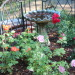 backyard livingroom, concrete floor, with an unfinished fireplace, my first waterfall and gazebo for my fine outdoor dining area with some roses for my lovely wife., Bird bath's add to your garden and can become a essential element in anyone's garden.They attract all kinds and colors of birds. When i learn to attract humming birds without disturbing their feed habits i will plant what ever it takes to draw them near., Patios & Decks Design