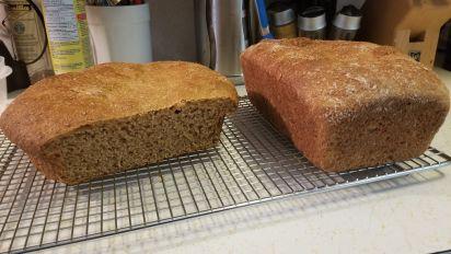 100 Whole Grain Wheat Bread