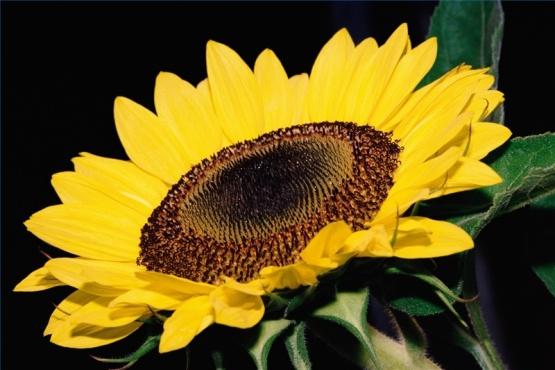 Roasted Salted Sunflower Seed Recipe Genius Kitchen
